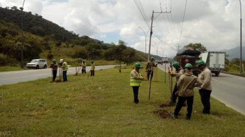 Avanza compensación forestal del Portal Norte – Ciudad Jardín