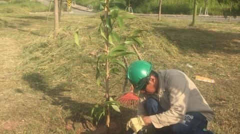 Árboles sembrados por el Portal Piedecuesta serán cuidados durante y después de la obra