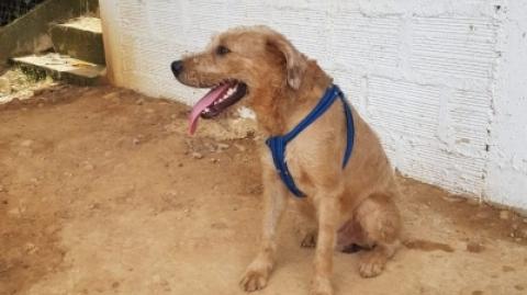 Cusumbo, canino hallado en una estación de Metrolínea, busca hogar